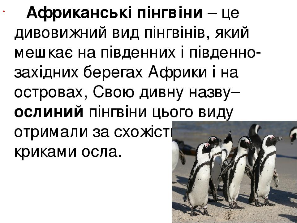 Африканські пінгвіни – це дивовижний вид пінгвінів, який мешкає на південних і південно-західних берегах Африки і на островах, Свою дивну назву–...
