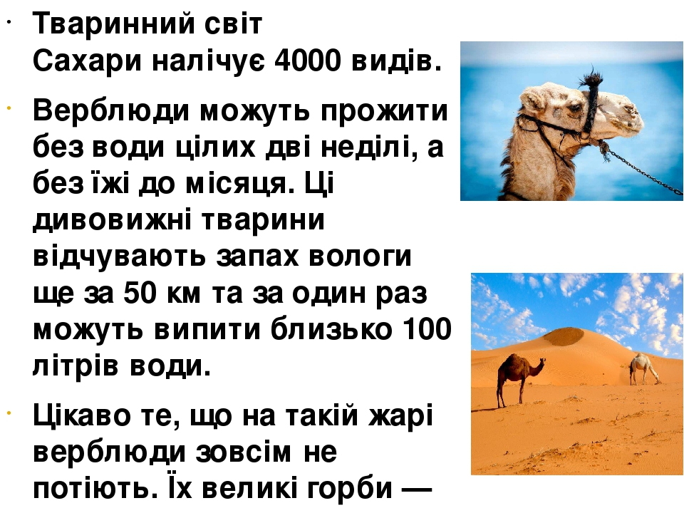 Тваринний світ Сахариналічує 4000 видів. Верблюди можуть прожити без води цілих дві неділі, а без їжі до місяця. Ці дивовижні тварини відчувають з...