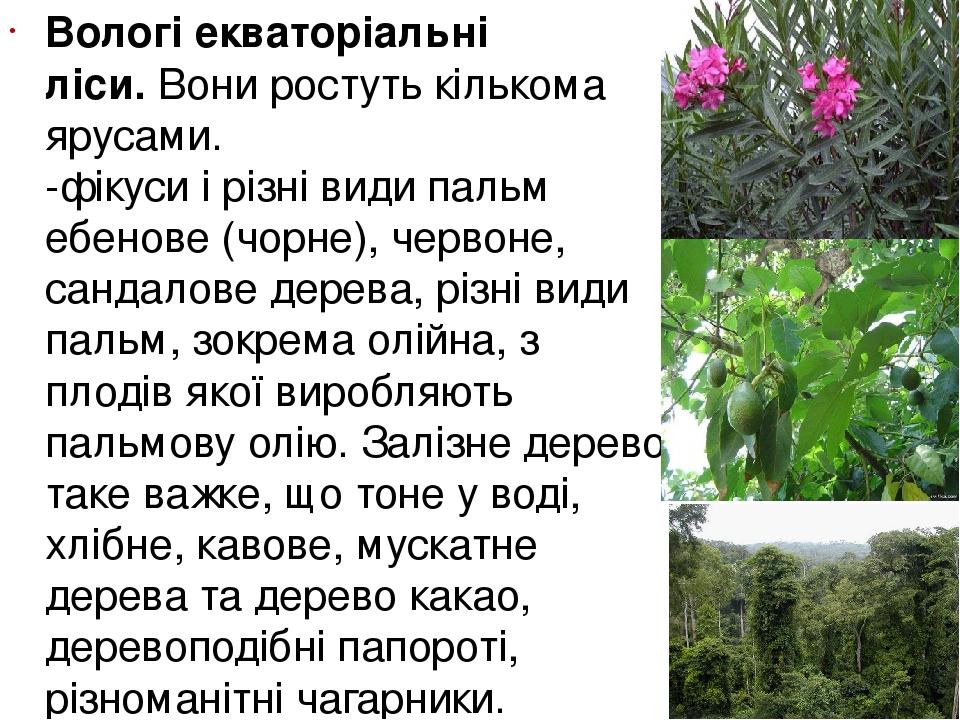 Вологі екваторіальні ліси.Вони ростуть кількома ярусами. -фікуси і різні види пальм ебенове (чорне), червоне, сандалове дерева, різні види пальм, ...