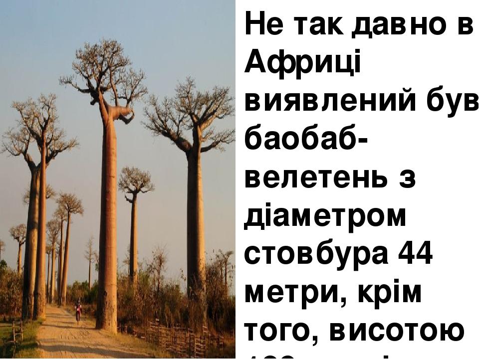 Не так давно в Африці виявлений був баобаб-велетень з діаметром стовбура 44 метри, крім того, висотою 189 метрів