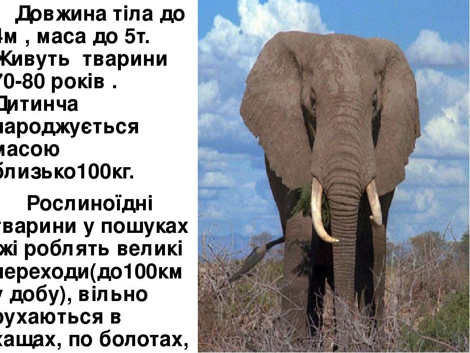 Довжина тіла до 4м , маса до 5т. Живуть тварини 70-80 років . Дитинча народжується масою близько100кг. Рослиноїдні тварини у пошуках їжі роблять ве...