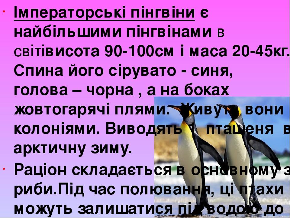 Імператорські пінгвіни є найбільшими пінгвінамив світівисота 90-100см і маса 20-45кг. Спина його сірувато - синя, голова – чорна , а на боках жовт...