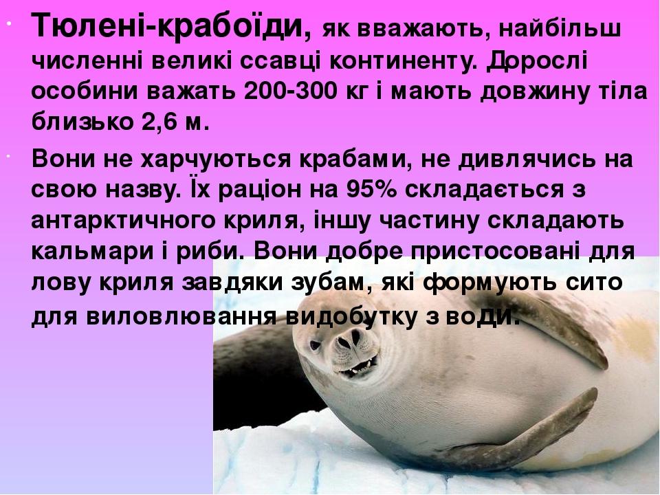 Тюлені-крабоїди, як вважають, найбільш численні великі ссавці континенту. Дорослі особини важать 200-300 кг і мають довжину тіла близько 2,6 м. Во...