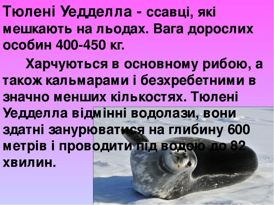 Тюлені Уедделла- ссавці, які мешкають на льодах. Вага дорослих особин 400-450 кг. Харчуються в основному рибою, а також кальмарами і безхребетними...