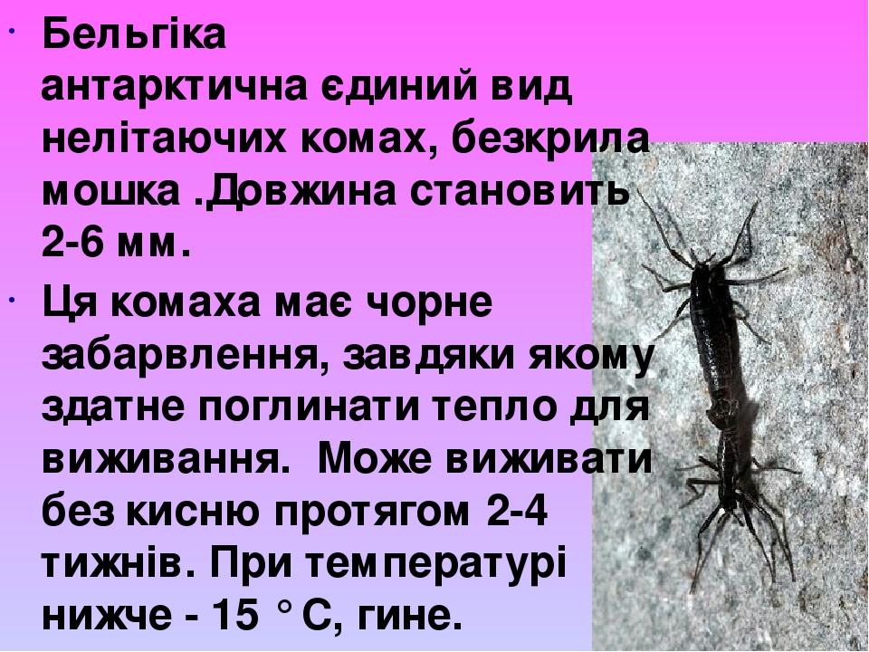 Бельгіка антарктичнаєдиний вид нелітаючихкомах, безкрила мошка .Довжина становить 2-6 мм. Ця комаха має чорне забарвлення, завдяки якому здатне п...
