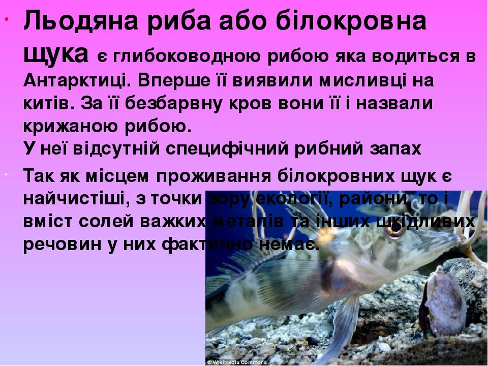 Льодяна риба або білокровна щука є глибоководною рибою яка водиться в Антарктиці. Вперше її виявили мисливці на китів. За її безбарвну кров вони її...