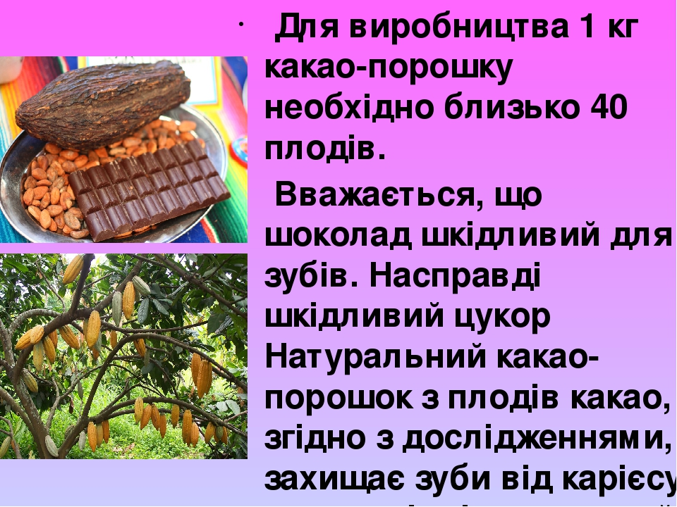 Для виробництва 1 кг какао-порошку необхідно близько 40 плодів. Вважається, що шоколад шкідливий для зубів. Насправді шкідливий цукор Натуральний к...