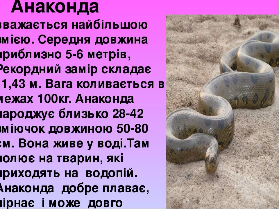 Анаконда вважається найбільшою змією. Середня довжина приблизно 5-6 метрів, Рекордний замір складає 11,43 м. Вага коливається в межах 100кг. Анакон...