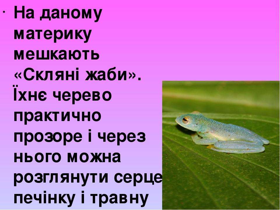 На даному материку мешкають «Скляні жаби». Їхнє черево практично прозоре і через нього можна розглянути серце, печінку і травну систему. Сам колір ...
