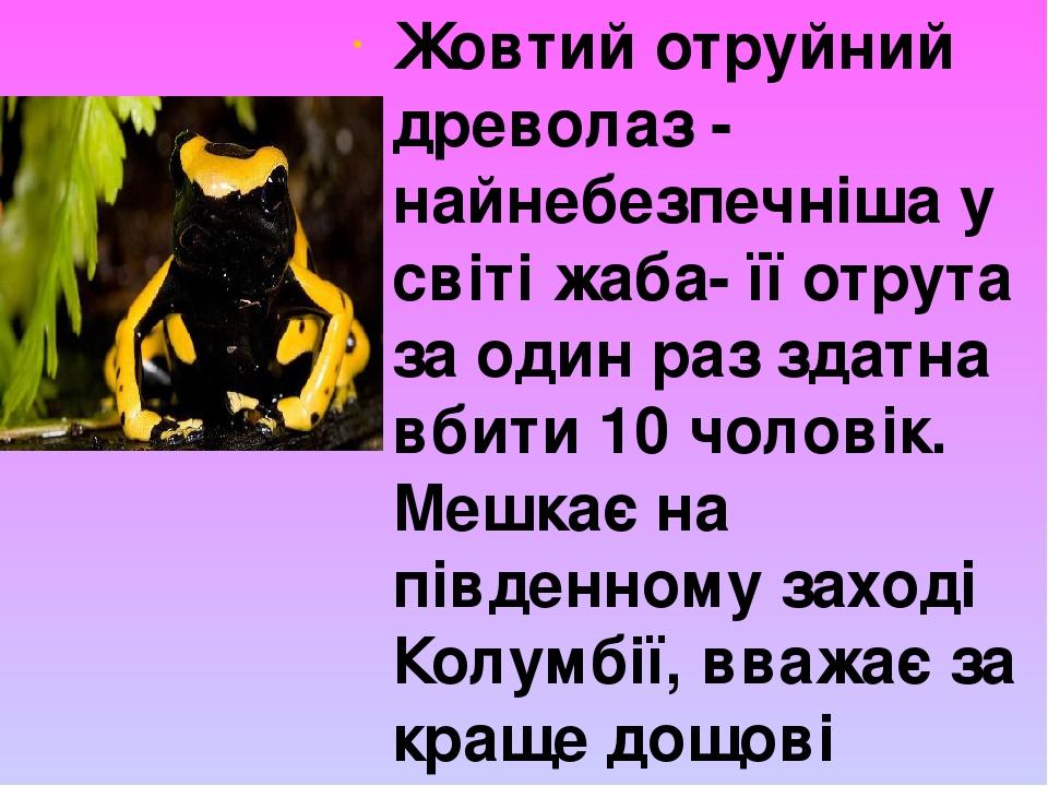 Жовтий отруйний древолаз - найнебезпечніша у світі жаба- її отрута за один раз здатна вбити 10 чоловік. Мешкає на південному заході Колумбії, вважа...