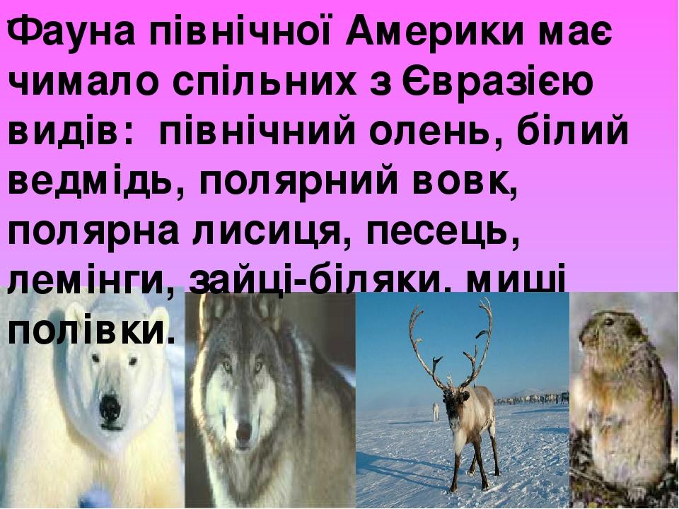 Фауна північної Америки має чимало спільних з Євразією видів: північний олень, білий ведмідь, полярний вовк, полярна лисиця, песець, лемінги, за...