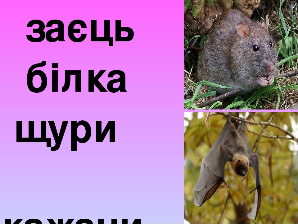 заєць білка щури кажани