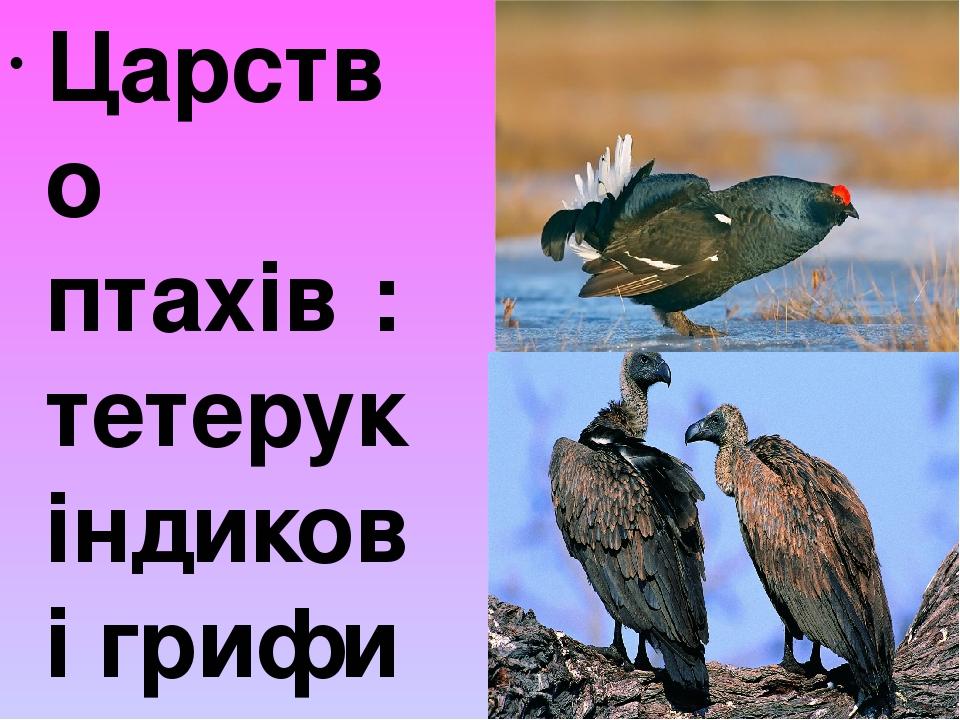 Царство птахів : тетерук індикові грифи