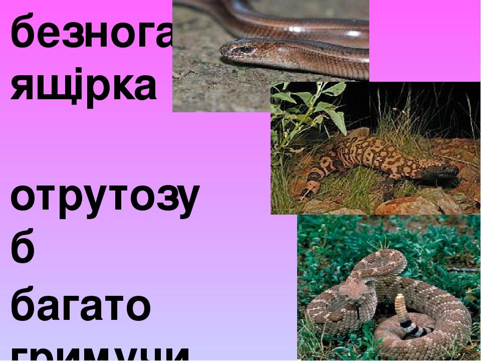 безнога ящірка отрутозуб багато гримучих змій
