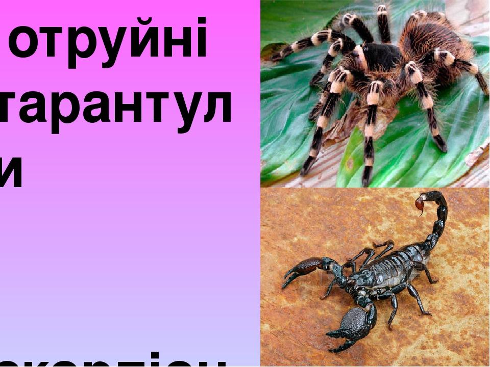отруйні тарантули скорпіони
