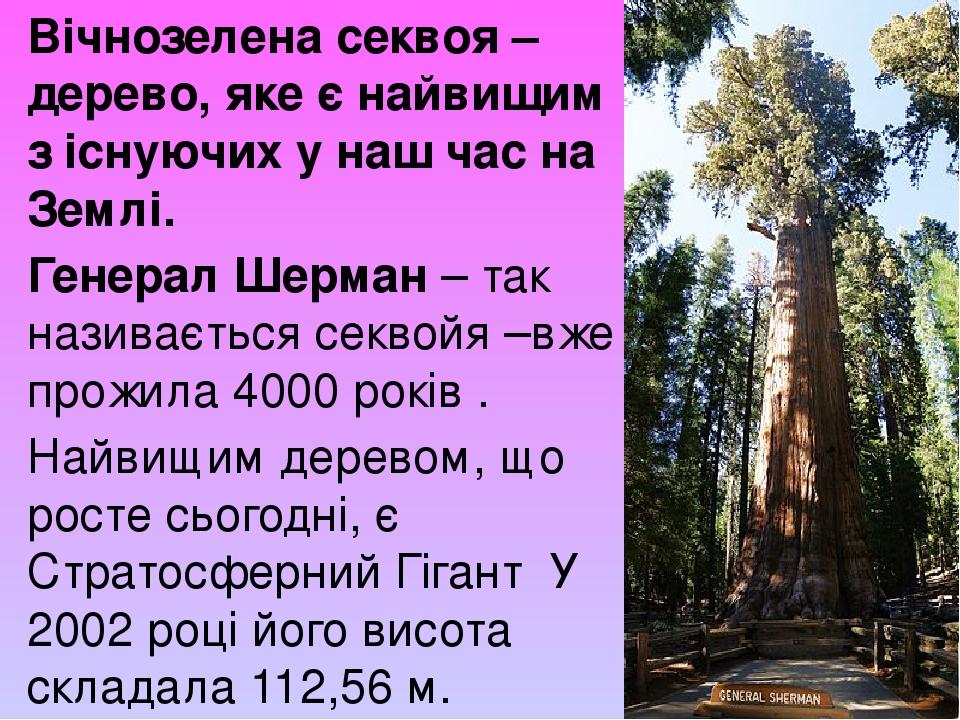 Вічнозелена секвоя – дерево, яке є найвищим з існуючих у наш час на Землі. Генерал Шерман – так називається секвойя –вже прожила 4000 років . Найви...