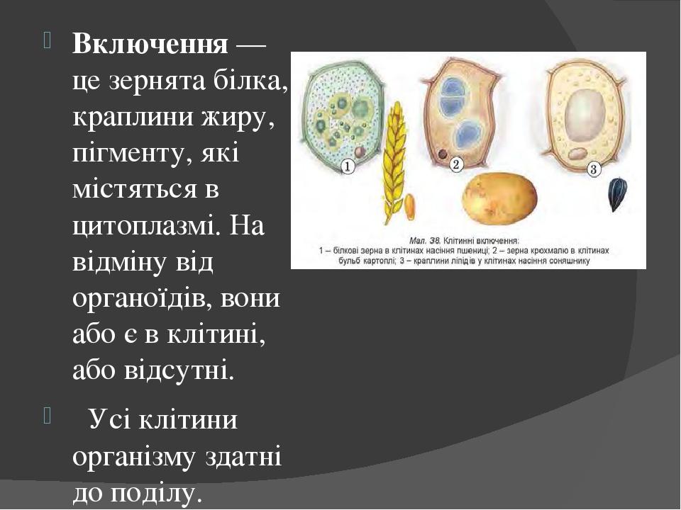 Включення — це зернята білка, краплини жиру, пігменту, які містяться в цитоплазмі. На відміну від органоїдів, вони або є в клітині, або відсутні. У...