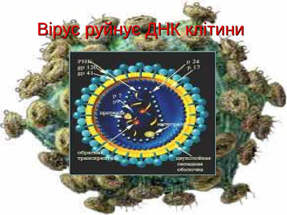 Вірус руйнує ДНК клітини