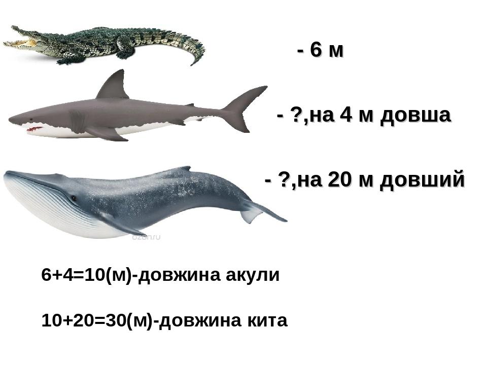 - 6 м - ?,на 4 м довша - ?,на 20 м довший 6+4=10(м)-довжина акули 10+20=30(м)-довжина кита