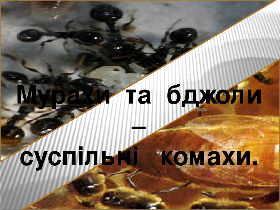 Мурахи та бджоли – суспільні комахи.