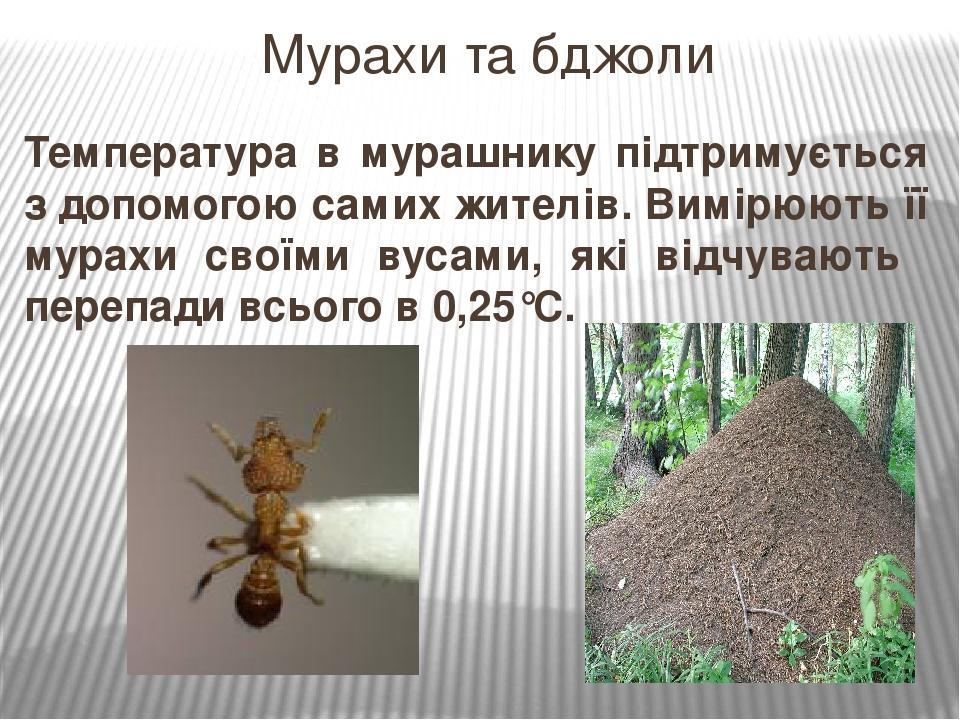Температура в мурашнику підтримується з допомогою самих жителів. Вимірюють її мурахи своїми вусами, які відчувають перепади всього в 0,25°С. Мурахи...