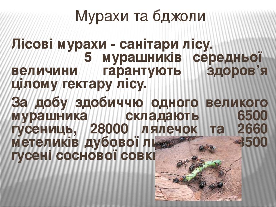 Лісові мурахи - санітари лісу. 5 мурашників середньої величини гарантують здоров'я цілому гектару лісу. За добу здобиччю одного великого мурашника ...