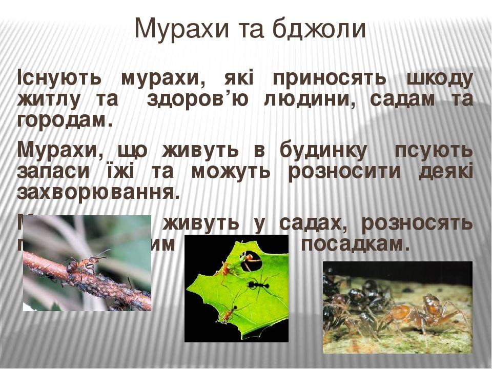 Існують мурахи, які приносять шкоду житлу та здоров'ю людини, садам та городам. Мурахи, що живуть в будинку псують запаси їжі та можуть розносити д...