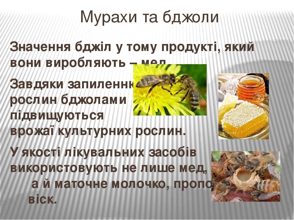 Значення бджіл у тому продукті, який вони виробляють – мед. Завдяки запиленню рослин бджолами підвищуються врожаї культурних рослин. У якості лікув...