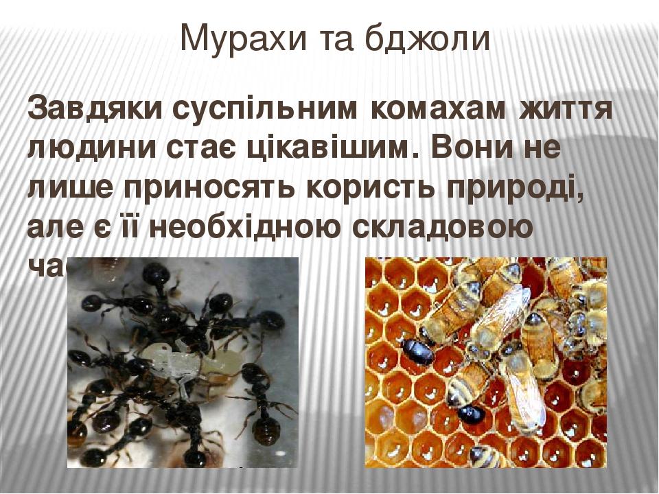 Завдяки суспільним комахам життя людини стає цікавішим. Вони не лише приносять користь природі, але є її необхідною складовою частиною. Мурахи та б...
