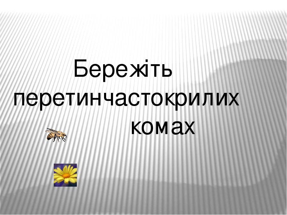 Бережіть перетинчастокрилих комах