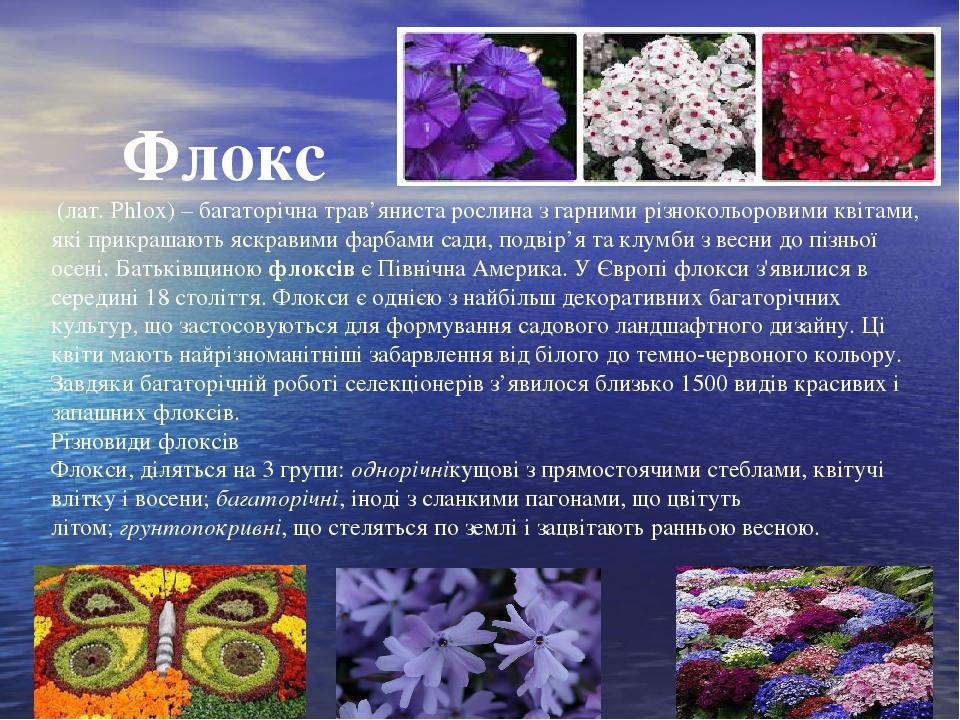 Флокс (лат. Phlox) – багаторічна трав'яниста рослина з гарними різнокольоровими квітами, які прикрашають яскравими фарбами сади, подвір'я та клумб...