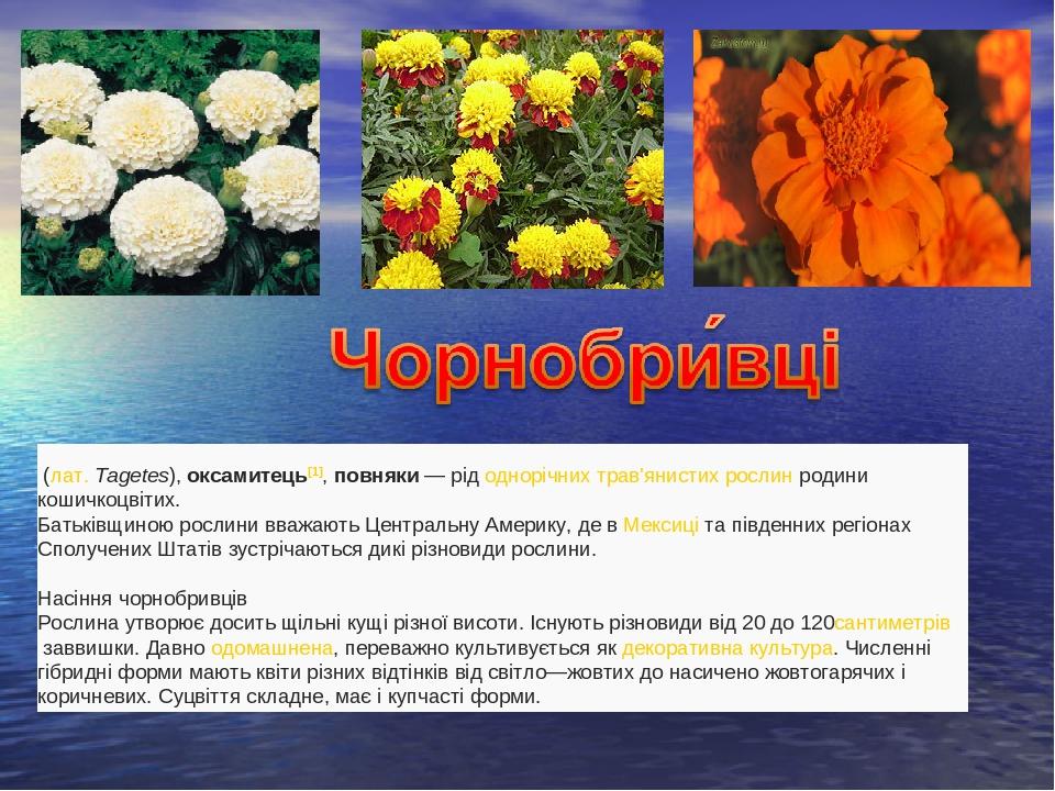 (лат.Tagetes),оксамитець[1],повняки— рідоднорічнихтрав'янистих рослинродини кошичкоцвітих. Батьківщиною рослини вважають Центральну Америку...