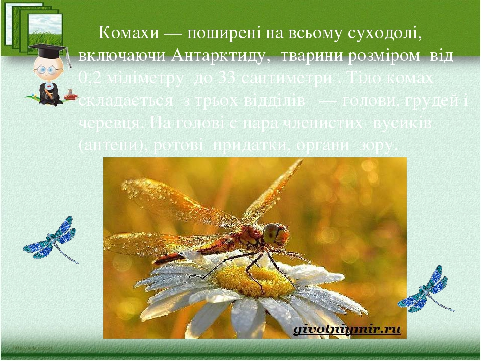 Комахи — поширені на всьому суходолі, включаючи Антарктиду, тварини розміром від 0,2 міліметру до 33 сантиметри . Тіло комах складається з трьох ві...