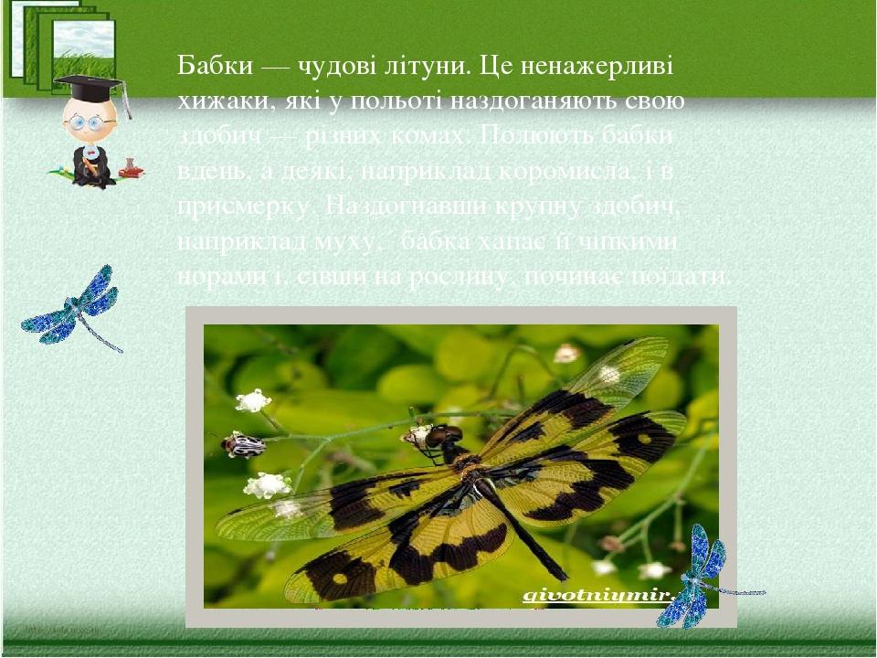 Бабки — чудові літуни. Це ненажерливі хижаки, які у польоті наздоганяють свою здобич — різних комах. Полюють бабки вдень, а деякі, наприклад короми...