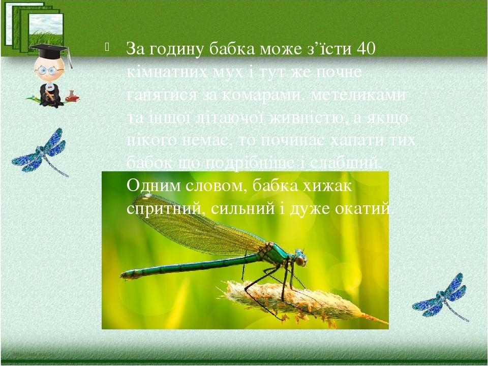 За годину бабка може з'їсти 40 кімнатних мух і тут же почне ганятися за комарами, метеликами та іншої літаючої живністю, а якщо нікого немає, то по...