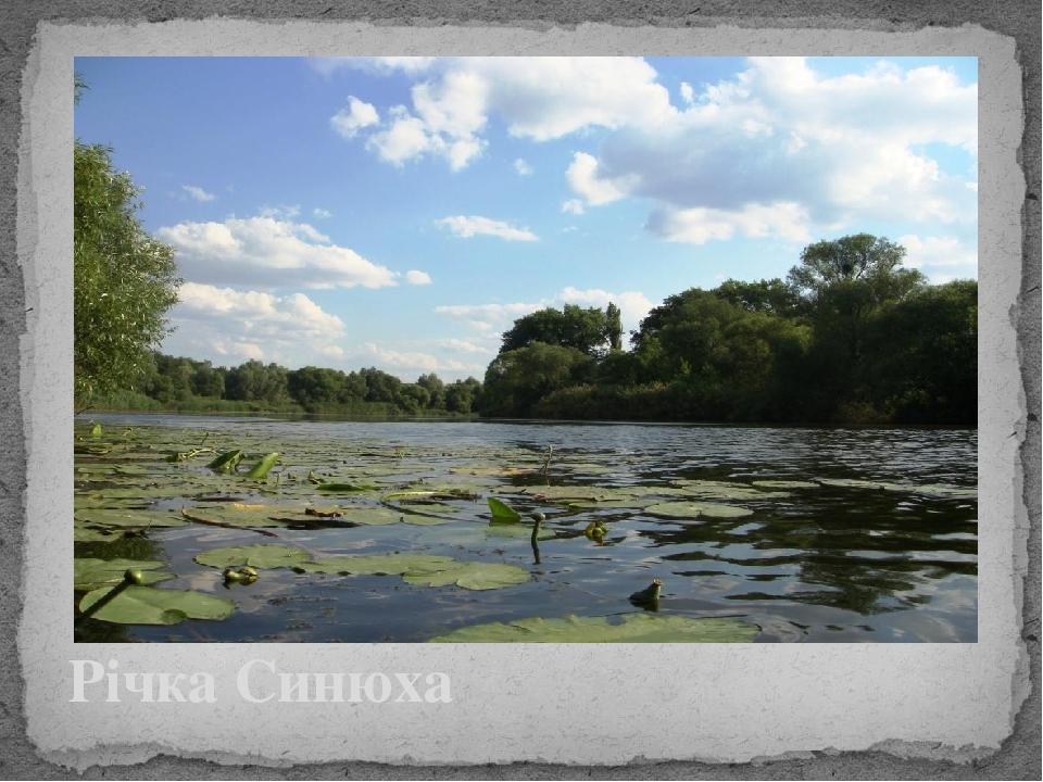 Річка Синюха