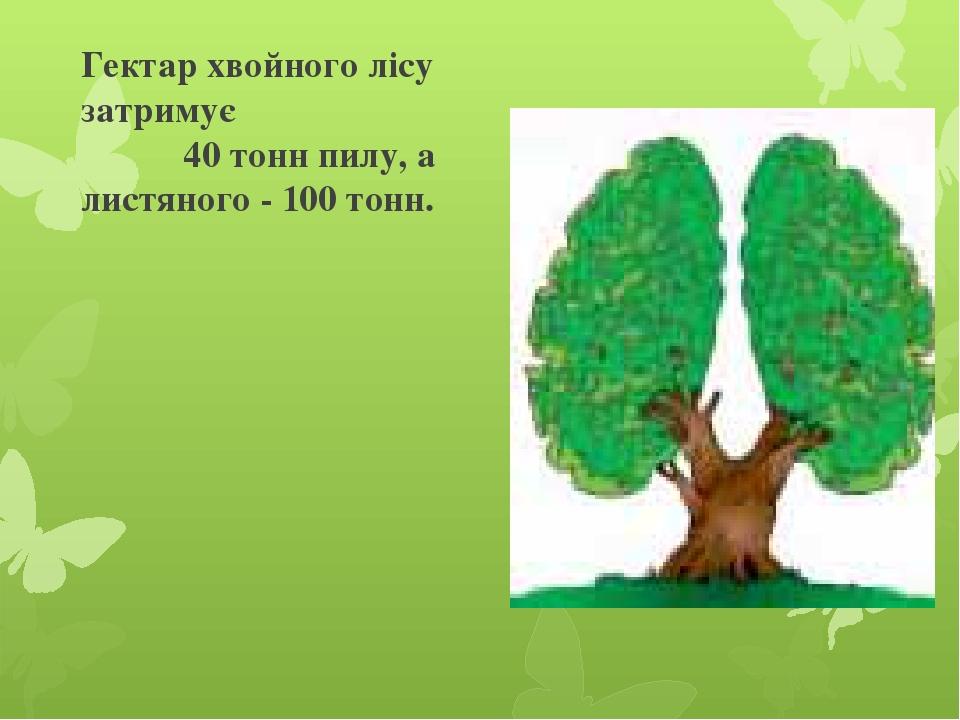 Гектар хвойного лісу затримує 40 тонн пилу, а листяного - 100 тонн.
