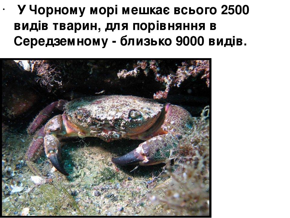 У Чорному морі мешкає всього 2500 видів тварин, для порівняння в Середземному - близько 9000 видів.