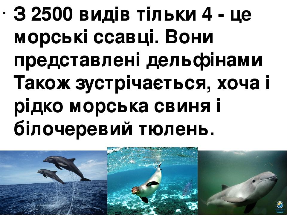 З 2500 видів тільки 4 - це морські ссавці. Вони представлені дельфінами Також зустрічається, хоча і рідко морська свиня і білочеревий тюлень.