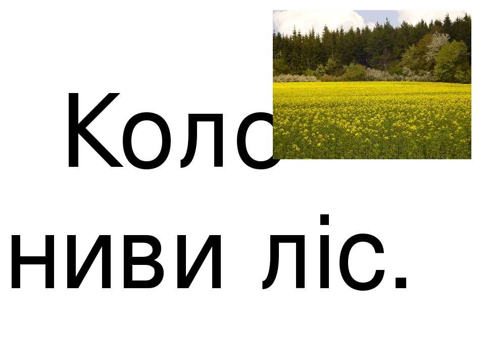 Коло ниви ліс.