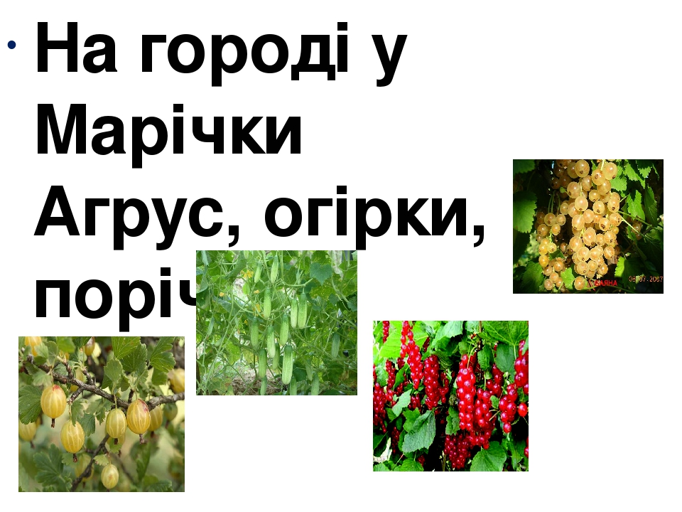 На городі у Марічки Агрус, огірки, порічки.
