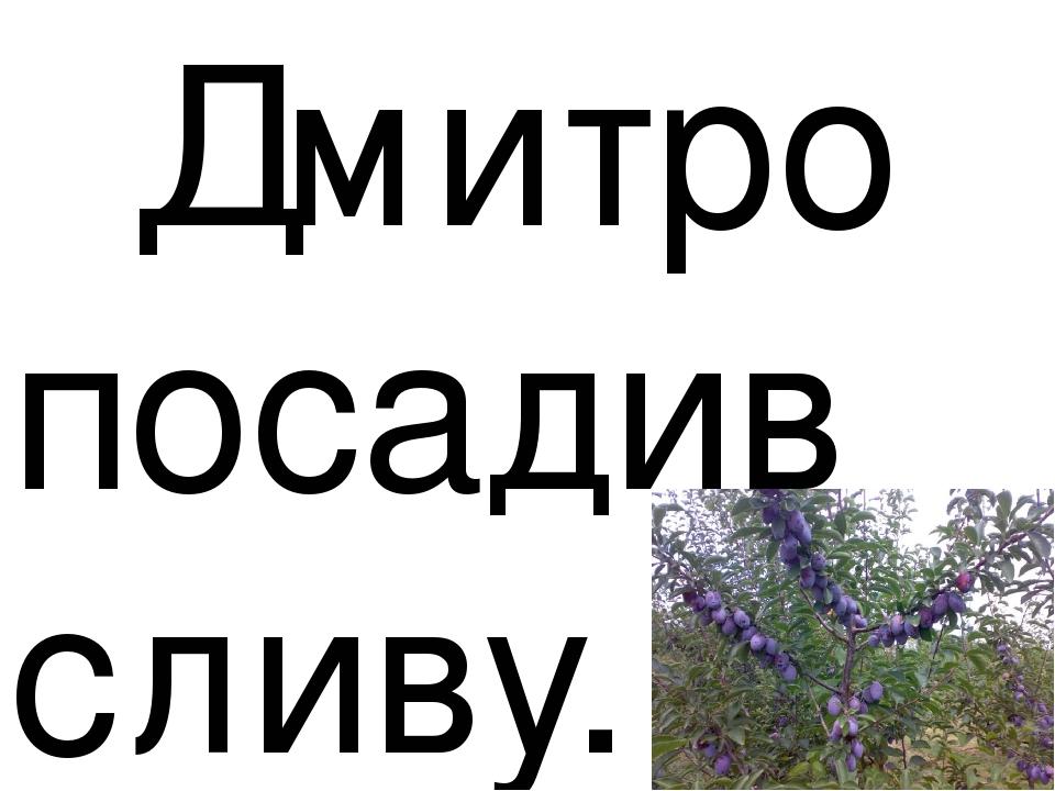 Дмитро посадив сливу.