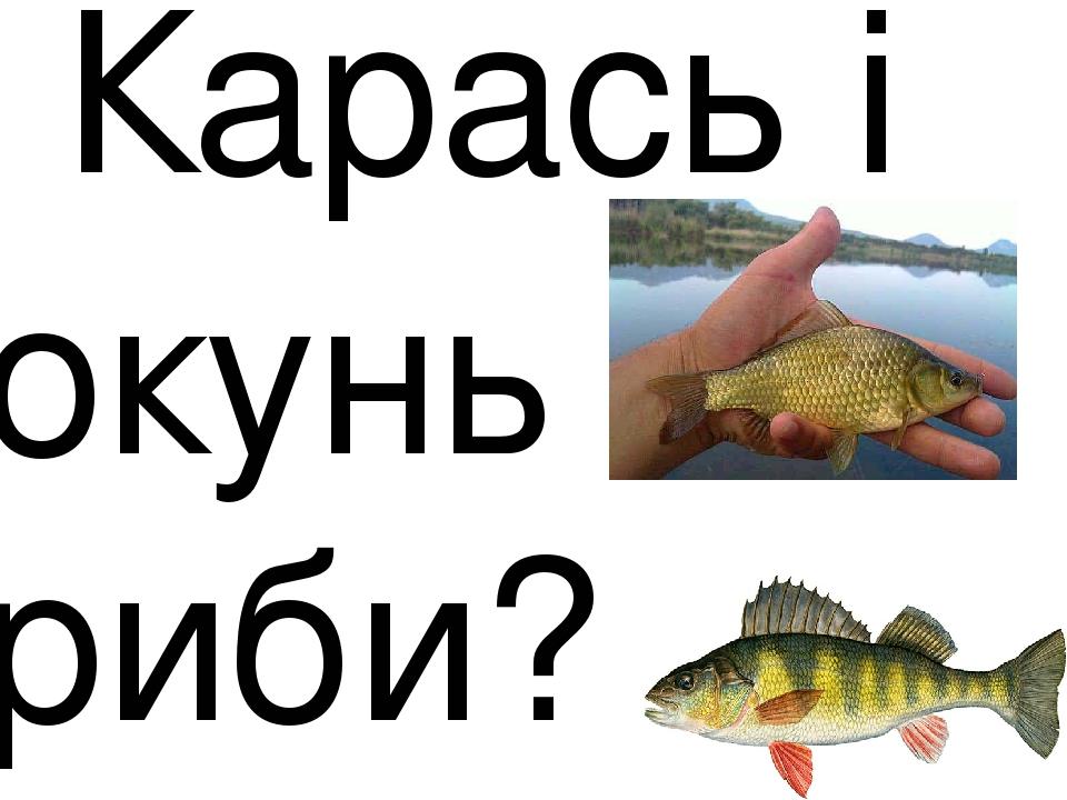 Карась і окунь риби?