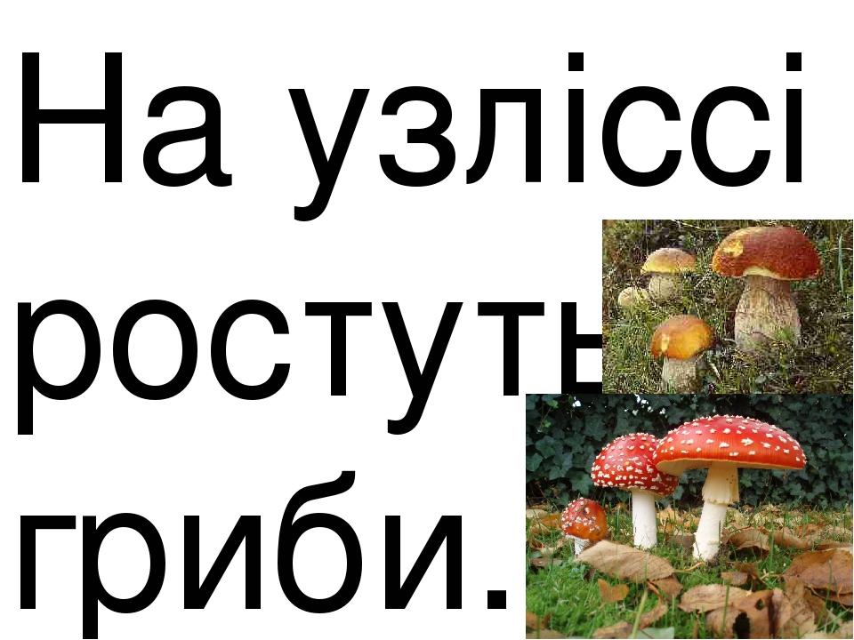 На узліссі ростуть гриби.