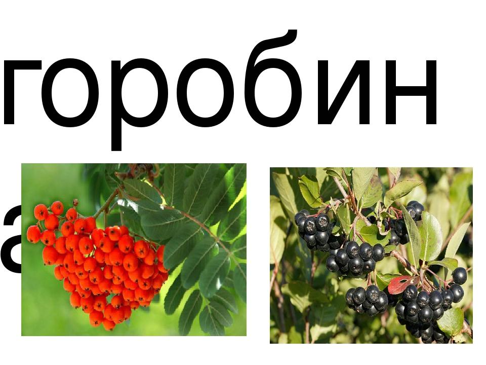 горобина