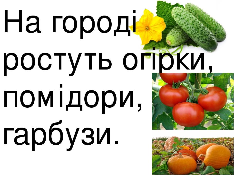 На городі ростуть огірки, помідори, гарбузи.