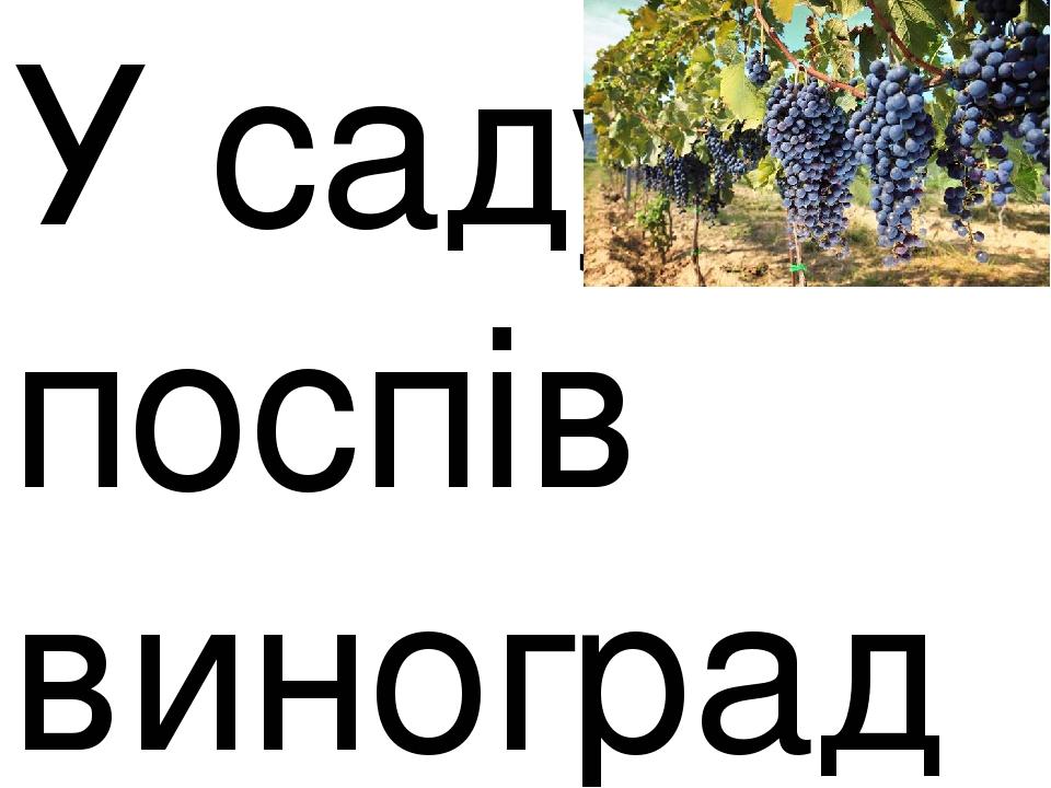 У саду поспів виноград?
