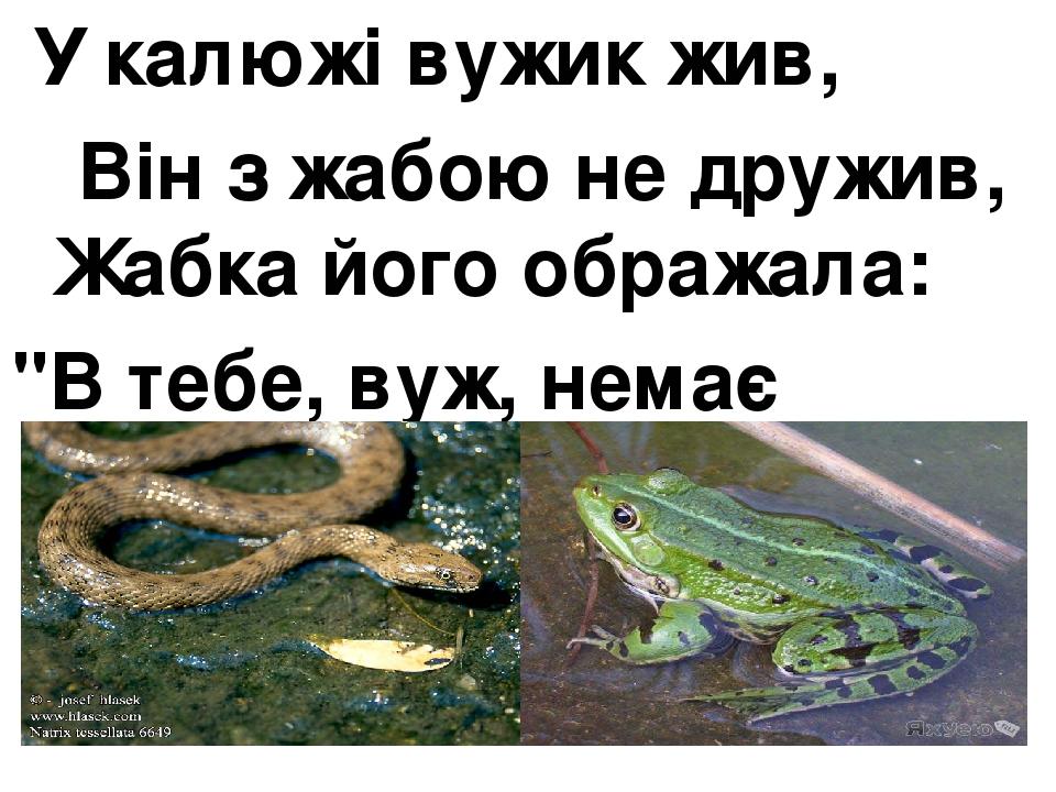 """У калюжі вужик жив, Він з жабою не дружив, Жабка його ображала: """"В тебе, вуж, немає жала!"""""""