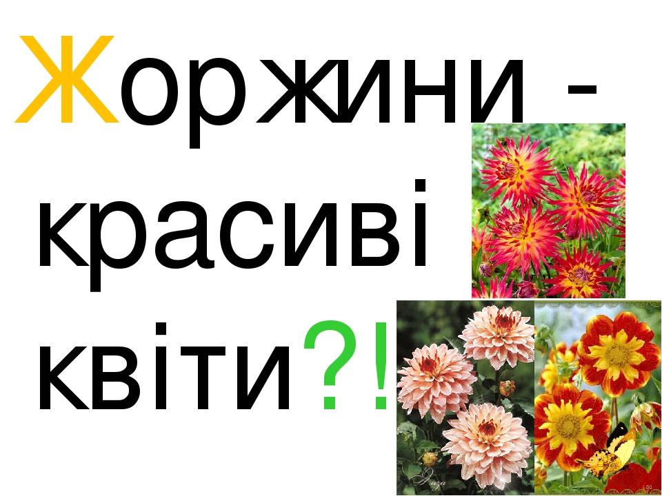 Жоржини - красиві квіти?!