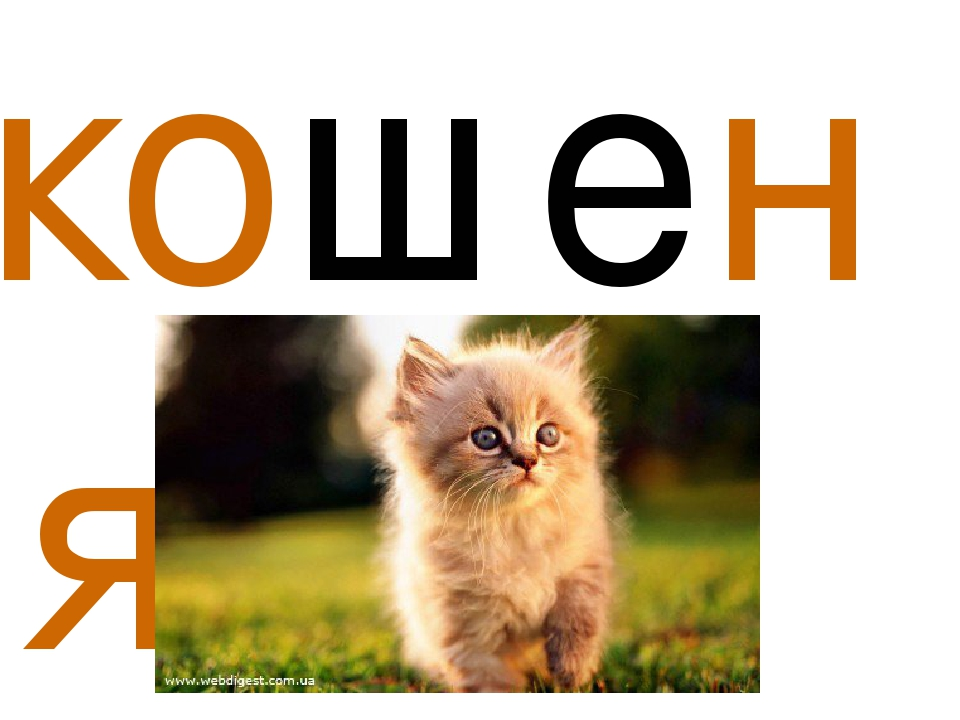 кошеня,